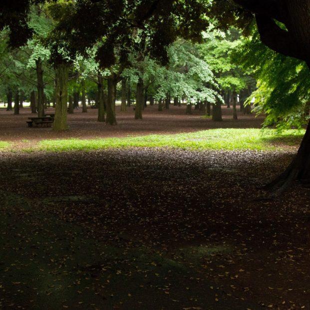 代々木公園アイキャッチ