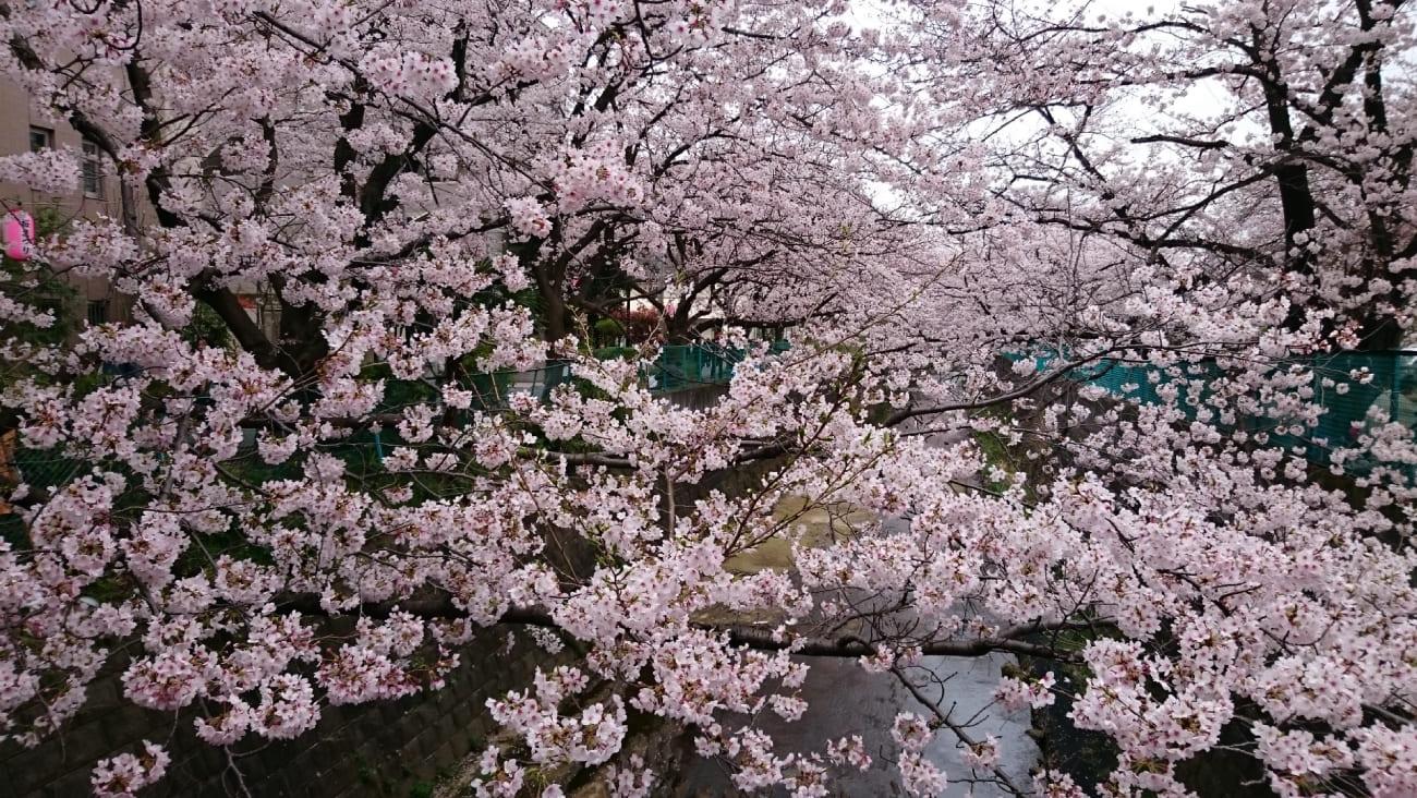 川崎市麻生区でおすすめしたい美容鍼3選★効果が期待できると人気!のMV画像